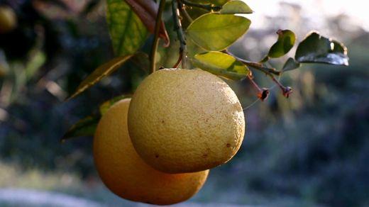 Как в Израиле научились выращивать растения на песке и камнях