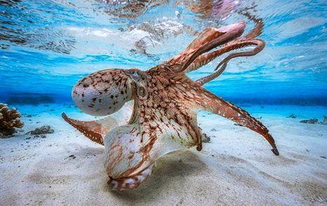Лучшие подводные фото 2017: опубликовали фантастические фотографии