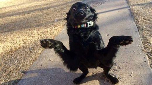 Здивований пес розсмішив мережу: підбірка мемів