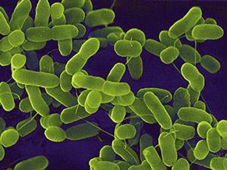 1700 человек заразились неизвестной ранее инфекцией