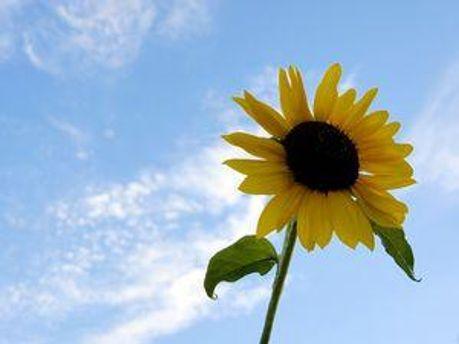 Завтра будет солнечно