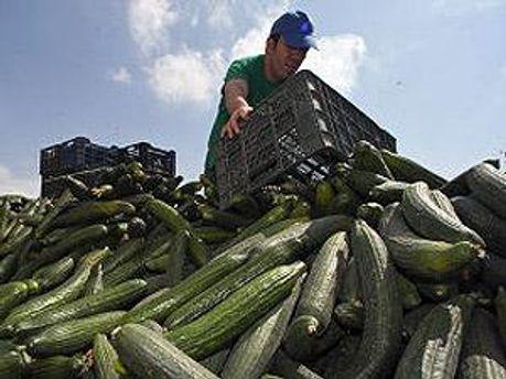 Фермеры должны получить компенсации