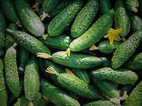 У Франції закликають їсти огірки