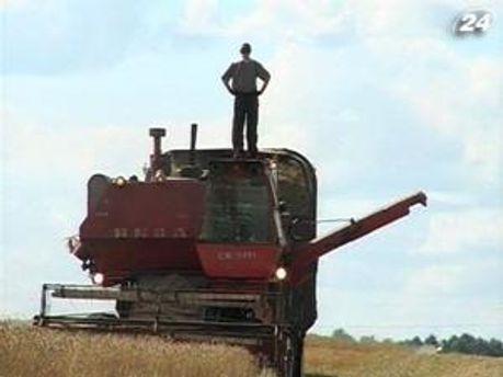 Урожай зерна в этом году увеличится