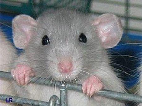 Мышки полетают в космосе