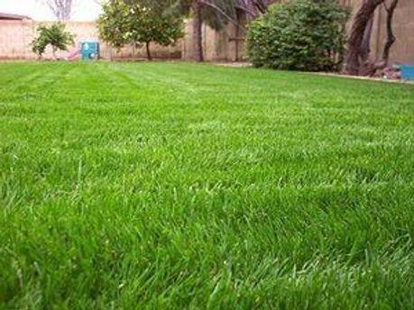 Трави буде майже на мільйон