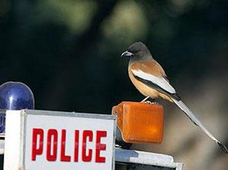 Местная полиция готова к переговорам