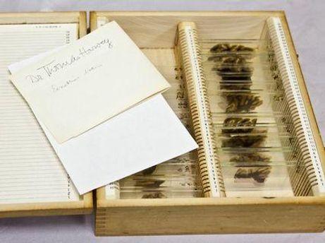 46 фрагментов мозга Эйнштейна, которые Харвей передал в Филадельфию