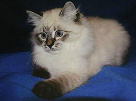 Котенок для Халонен
