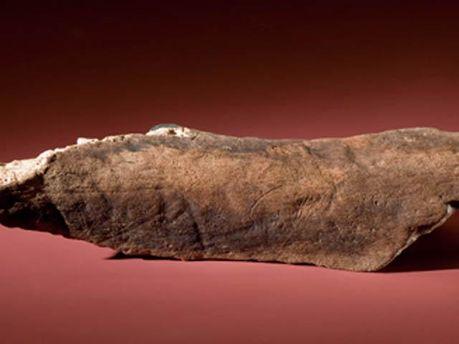 Дайвери знайшли кістки мамонтів