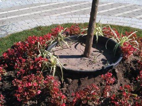 После празднования Крещения Руси из столичного парка убирают деревья