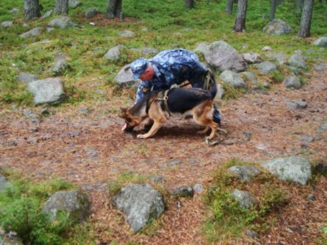 Правоохранители нашли тело по следам крови в лесу