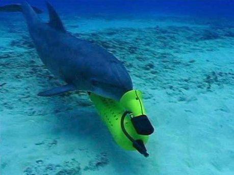 Бойовий дельфін