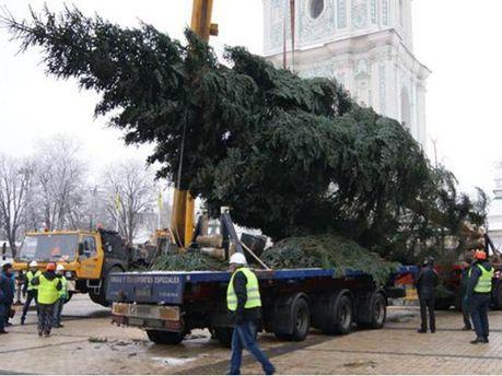 У Києві встановили головну ялинку (Фото)