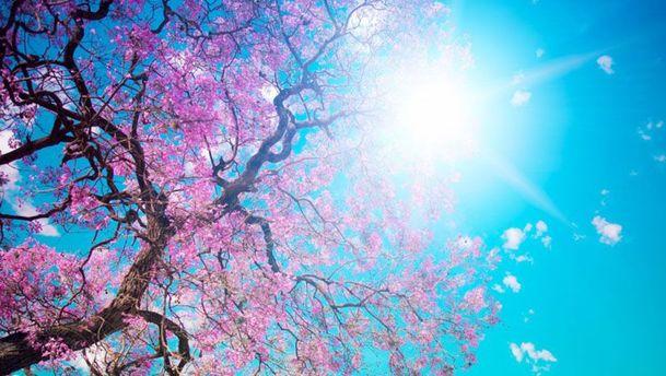 Цвітіння дерев