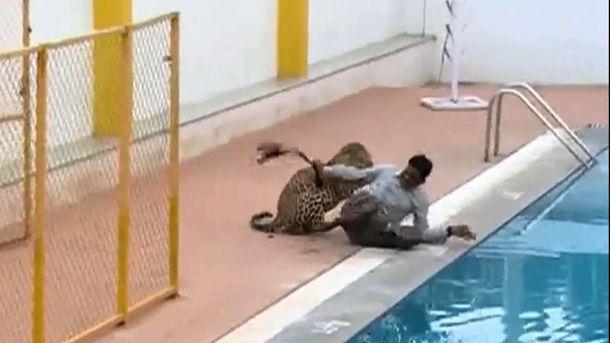 Напад леопарда