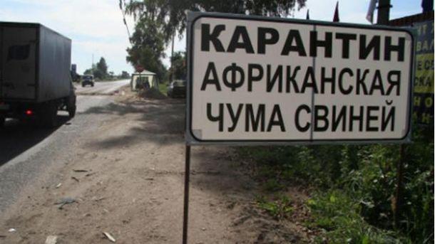 У Криму спалах африканської чуми свиней