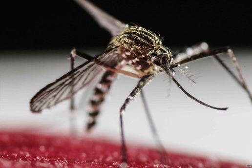Комаха, яка може переносити вірус Зіка