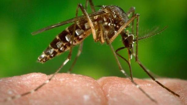 Комар-переносчик вируса Зика