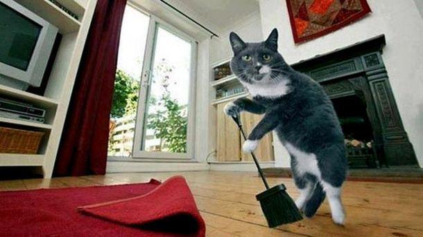 Кот прибирает