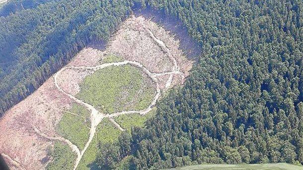 Завдання №1 – зупинити контрабанду лісу