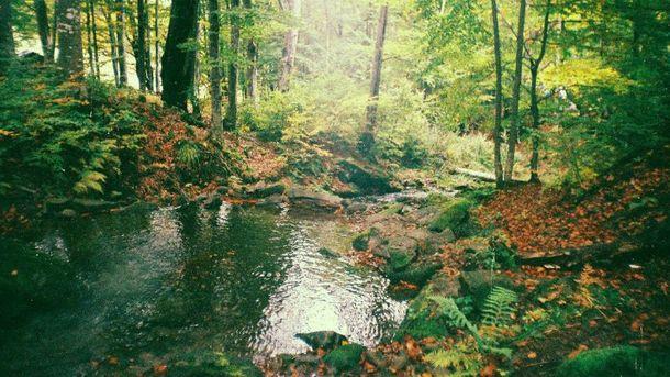 Осень  в Карпатах