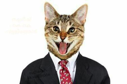 Кот в костюме