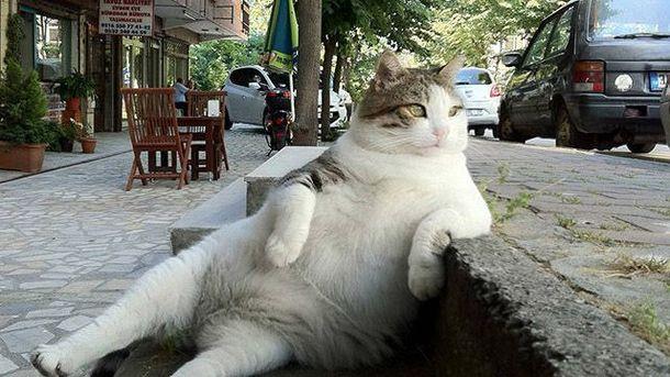Кот Томбо
