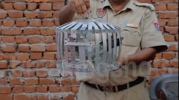 Голуба затримали в Індії