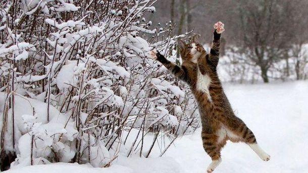 Кот радуется снегу