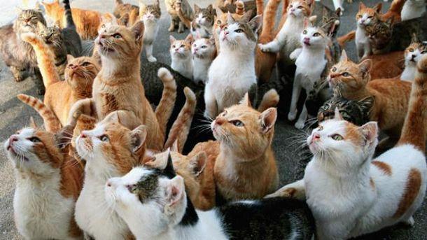 Любите відео про котиків?