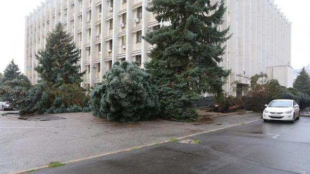 Ветер повалил елки в Одессе