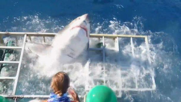 Акула ворвалась вклетку сдайвером уберегов Мексики