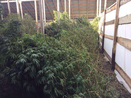 Вгосударстве Украина изъяли 5 тонн марихуаны практически на $600 тыс.
