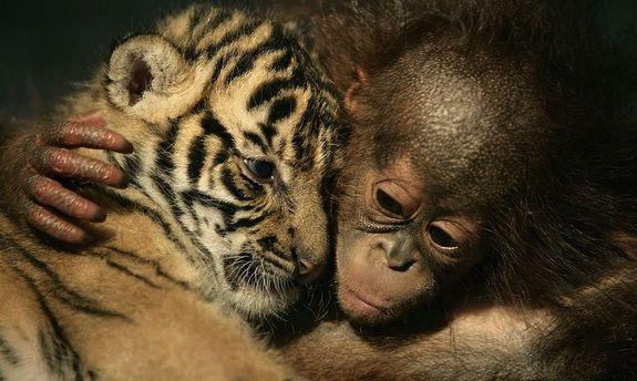 Число диких животных стремительно уменьшилось напланете— WWF
