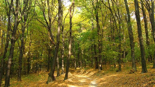 Усына Пшонки отобрали 15 тыс гектаров леса