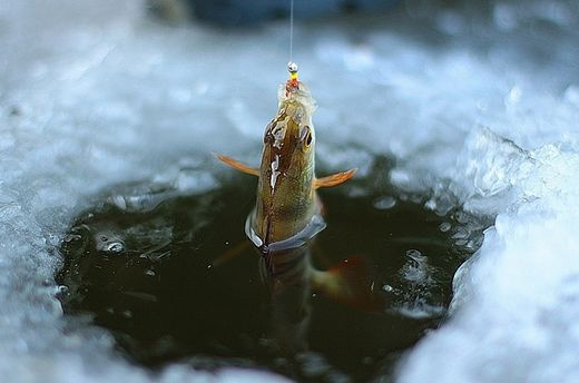 Зимняя рыбалка: что делать, чтобы не попасть под лед