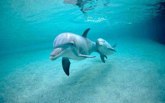 Четверо дельфинов убежали избассейна вЯпонии