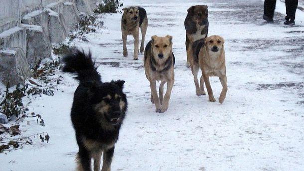 НаКиевщине собаки досмерти загрызли солдата АТО