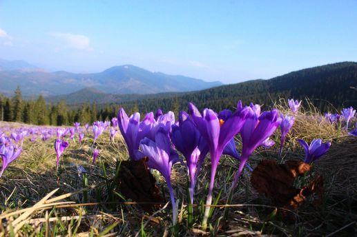 7 туристичних місць в Україні, які розквітають весною