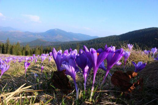 7 туристических мест в Украине, которые расцветают весной