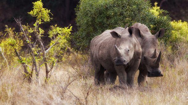 Що станеться з тваринним світом до кінця століття: шокуюча новина від вчених