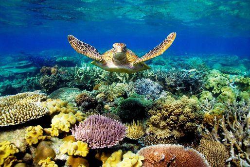 Великий бар'єрний риф може зникнути