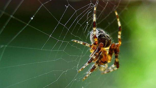 Ученые: пауки каждый год съедают 400-800 млн. тонн насекомых