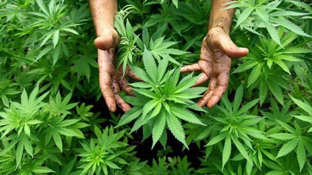 ВКанаде могут легализовать марихуану к1июля следующего года