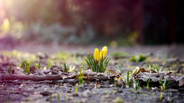Аномальный апрель: вКиеве погода установила пять рекордов