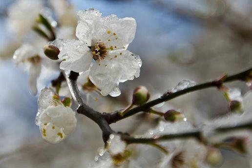Погода на 12 квітня: очікуються заморозки і дощі