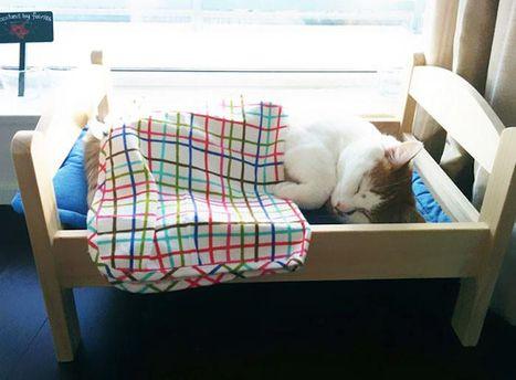 IKEA подарила приюту для кошек большое количество  деревянных кроваток