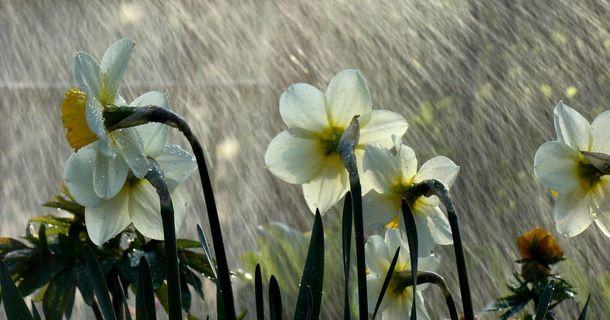 Прогноз погоди на 23 квітня: буде холодно та з дощами