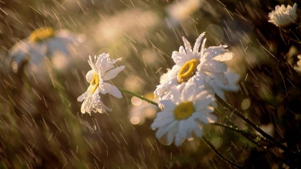 Прогноз погоди на 6 травня: захід заллють дощі, у Києві – сонячно